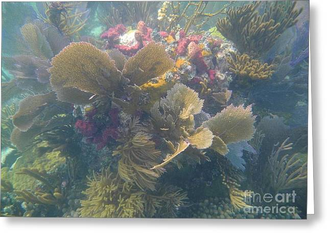 Underwater Colors Greeting Card by Adam Jewell