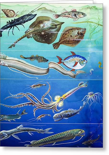 Diving Drawings Greeting Cards - Underwater Creatures Montage Greeting Card by English School