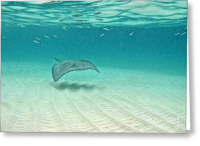 Peggy J Hughes Greeting Cards - Underwater Flight Greeting Card by Peggy J Hughes