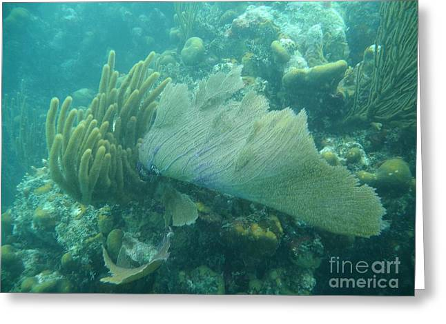 Photos Of Coral Greeting Cards - Underwater Forest Greeting Card by Adam Jewell