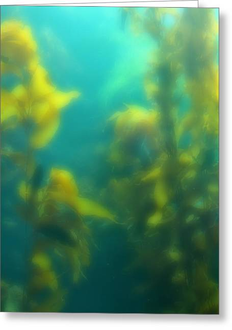 Best Ocean Photography Greeting Cards - Underwater Forest Greeting Card by Peter Penny