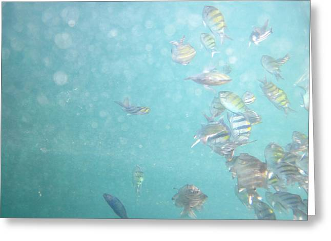 Snorkel Greeting Cards - Underwater - Long Boat Tour - Phi Phi Island - 011311 Greeting Card by DC Photographer