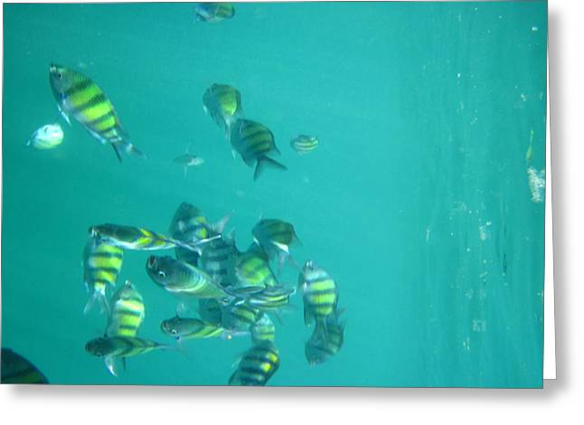 Underwater - Long Boat Tour - Phi Phi Island - 011315 Greeting Card by DC Photographer
