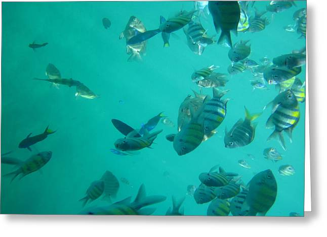 Surf Greeting Cards - Underwater - Long Boat Tour - Phi Phi Island - 011316 Greeting Card by DC Photographer