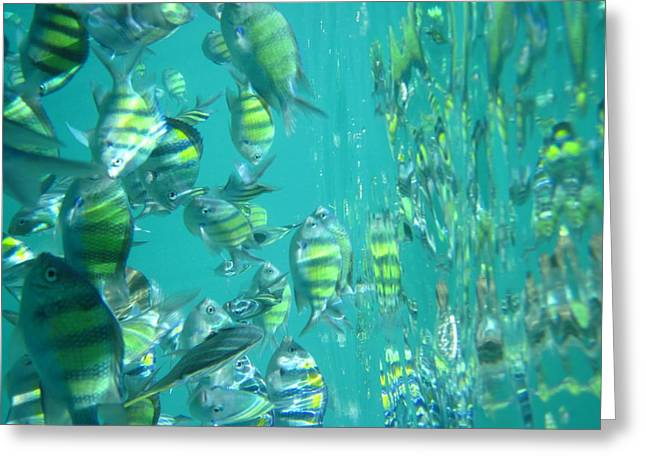 Snorkel Greeting Cards - Underwater - Long Boat Tour - Phi Phi Island - 011318 Greeting Card by DC Photographer
