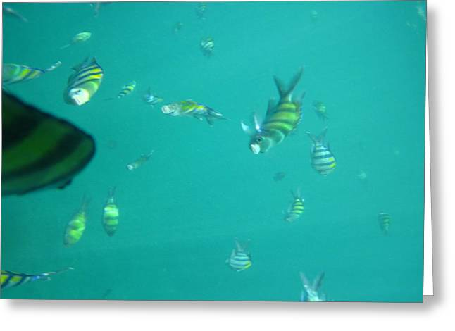 Underwater - Long Boat Tour - Phi Phi Island - 011319 Greeting Card by DC Photographer