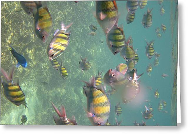 Snorkel Greeting Cards - Underwater - Long Boat Tour - Phi Phi Island - 011327 Greeting Card by DC Photographer