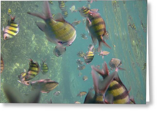 Snorkel Greeting Cards - Underwater - Long Boat Tour - Phi Phi Island - 011328 Greeting Card by DC Photographer
