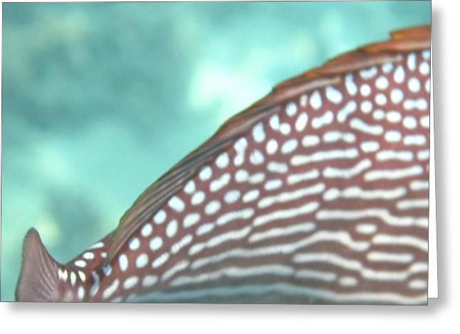 Snorkel Greeting Cards - Underwater - Long Boat Tour - Phi Phi Island - 011342 Greeting Card by DC Photographer