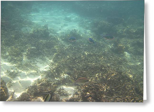 Snorkel Greeting Cards - Underwater - Long Boat Tour - Phi Phi Island - 011378 Greeting Card by DC Photographer