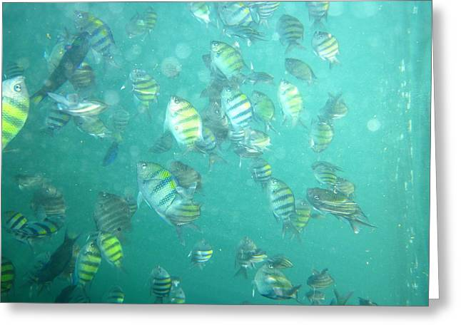 Underwater - Long Boat Tour - Phi Phi Island - 01139 Greeting Card by DC Photographer