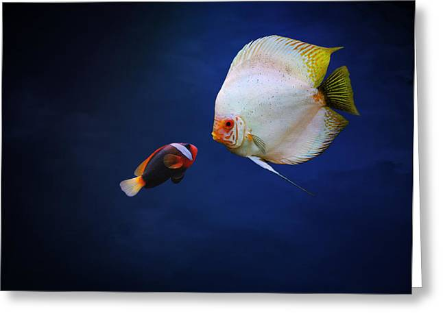 Clown Fish Photographs Greeting Cards - Underwater Love  Greeting Card by Heike Hultsch