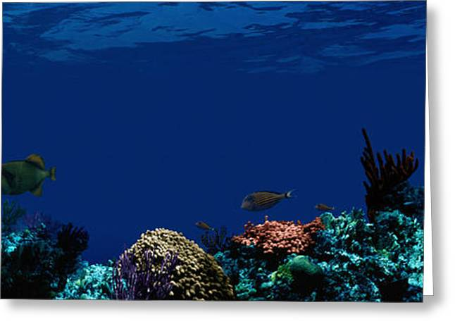 Ocean Habitat Greeting Cards - Underwater Greeting Card by Panoramic Images