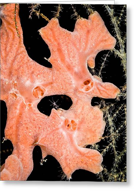 Polyp Greeting Cards - Underwater Sponge Greeting Card by Jean Noren