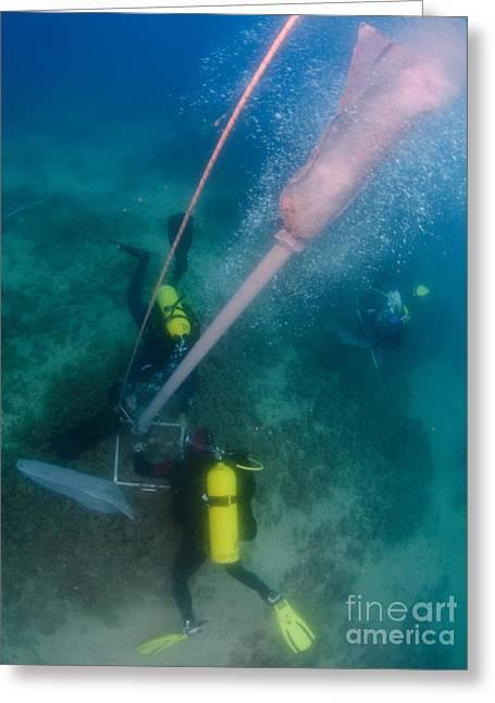 Surveying Greeting Cards - Underwater Survey Greeting Card by Hagai Nativ