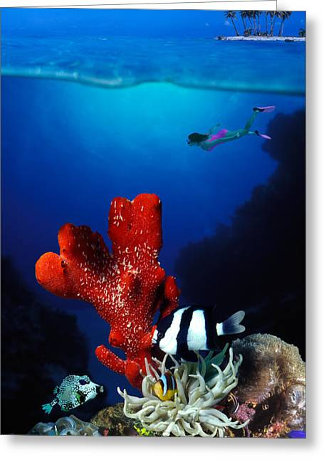 Damselfish Greeting Cards - Underwater View Of Sea Anemone Greeting Card by Panoramic Images