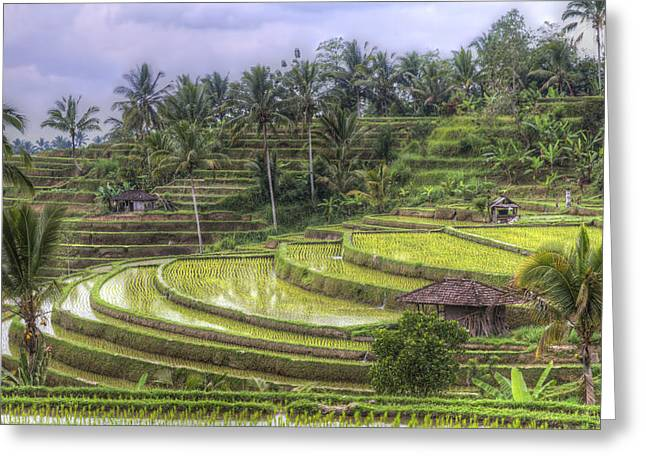 Manual Greeting Cards - UNESCO world heritage rice fields at Jatiluwih Bali Indonesia Greeting Card by Bart De Rijk
