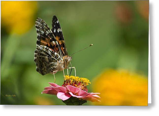 Painted Lady Butterflies Greeting Cards - Unforgettable Lady Butterfly Greeting Card by Christina Rollo