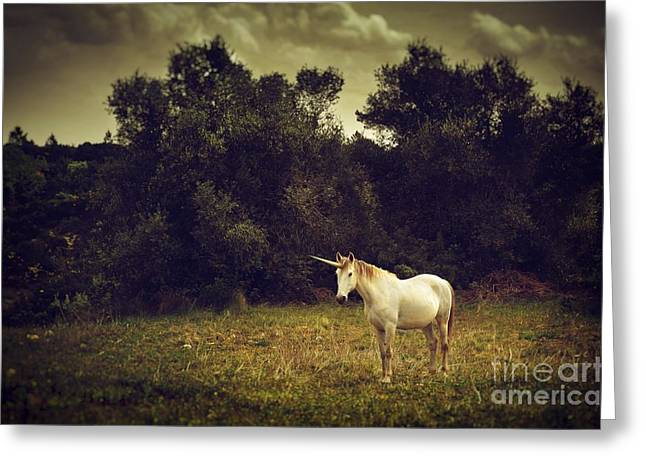 Fantasy Creature Photographs Greeting Cards - Unicorn Greeting Card by Carlos Caetano