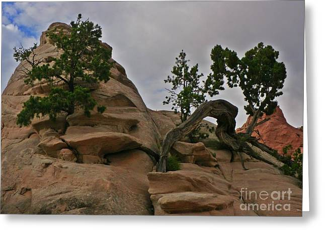 Growing Out Of Rock Greeting Cards - Unique Landscape Greeting Card by John Malone