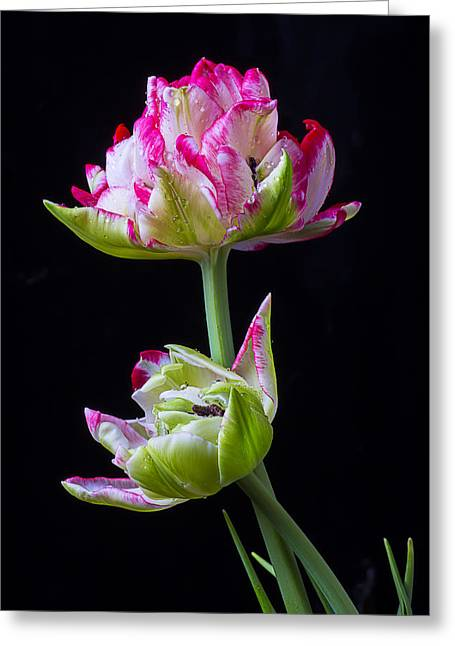 Rain Drop Greeting Cards - Unique Tulips Greeting Card by Garry Gay