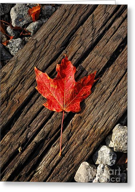 Red Leaves Greeting Cards - Uniquely Red Greeting Card by Pamela Baker