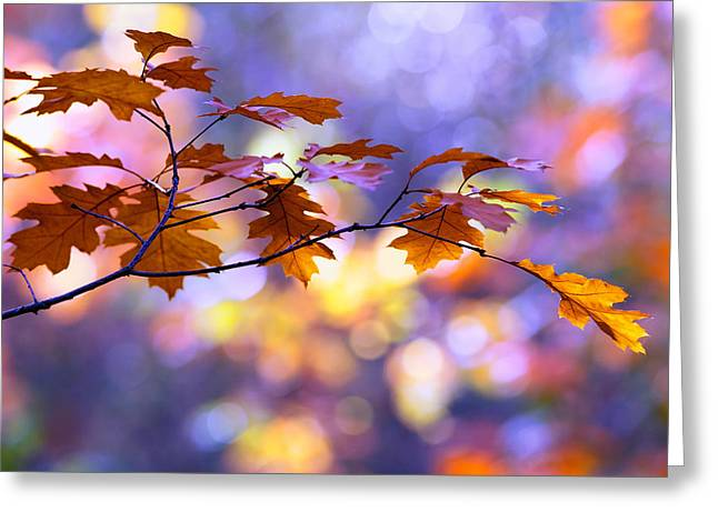 Autumn Art Greeting Cards - United Colours of Autumn II Greeting Card by Roeselien Raimond