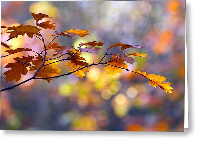 Autumn Decorations Greeting Cards - United Colours of Autumn Greeting Card by Roeselien Raimond