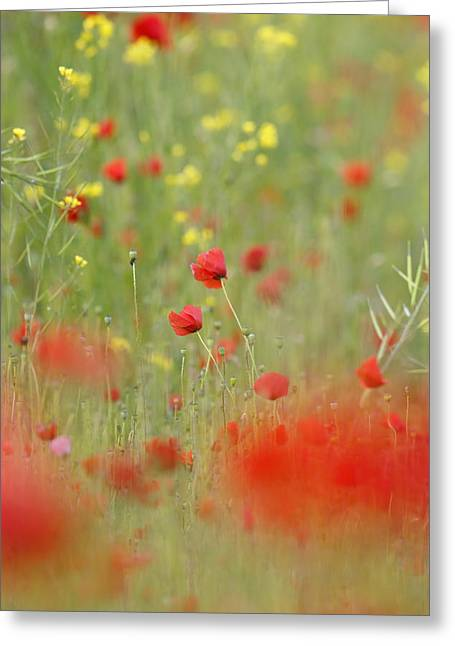 Bokeh Greeting Cards - United Colours of Summer Greeting Card by Roeselien Raimond