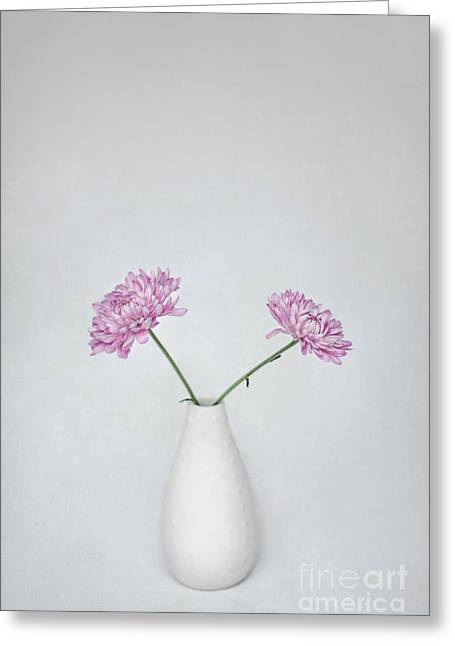 Aster Greeting Cards - United Greeting Card by Evelina Kremsdorf