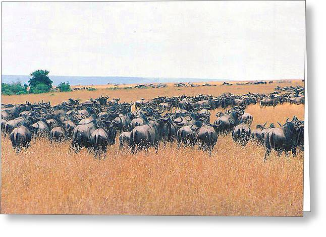 Wilderbeast Greeting Cards - United WE March Greeting Card by Joseph Wiegand