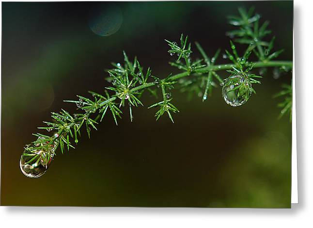 Universe in a glass of rain Greeting Card by Nataly Rubeo