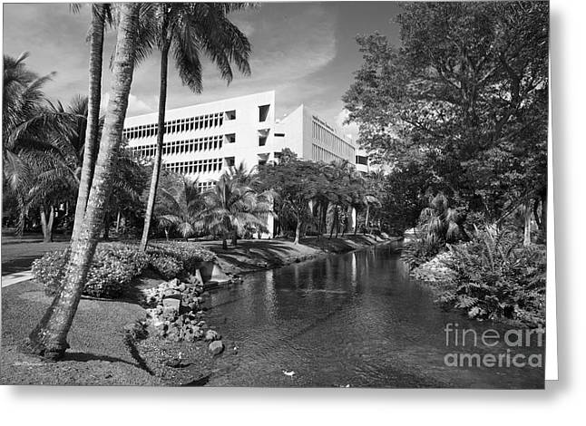 University Of Miami Greeting Cards - University of Miami School of Business Administration  Greeting Card by University Icons