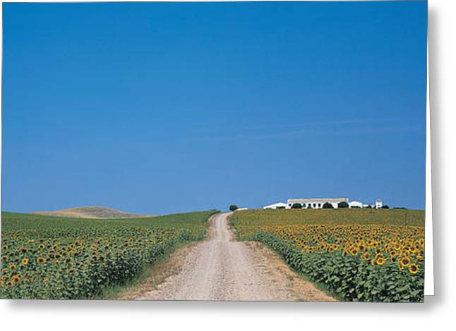 Flower Blooms Greeting Cards - Unpaved Road Andalucia Spain Greeting Card by Panoramic Images