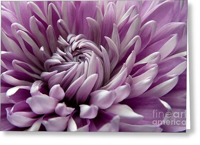 Purple Garden Greeting Cards - Untangling Greeting Card by Dan Holm