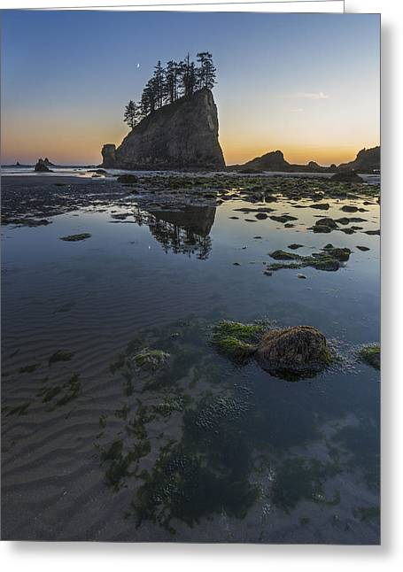 Botanical Beach Greeting Cards - Until the Sun Goes Down Greeting Card by Jon Glaser