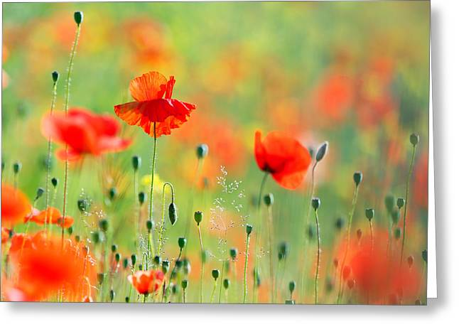 Bokeh Greeting Cards - Untited Colours of Summer  Greeting Card by Roeselien Raimond