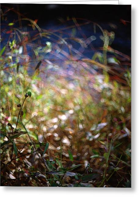 Leaves Of Grass Greeting Cards - Untitled 16 Greeting Card by Anna Radcliffe