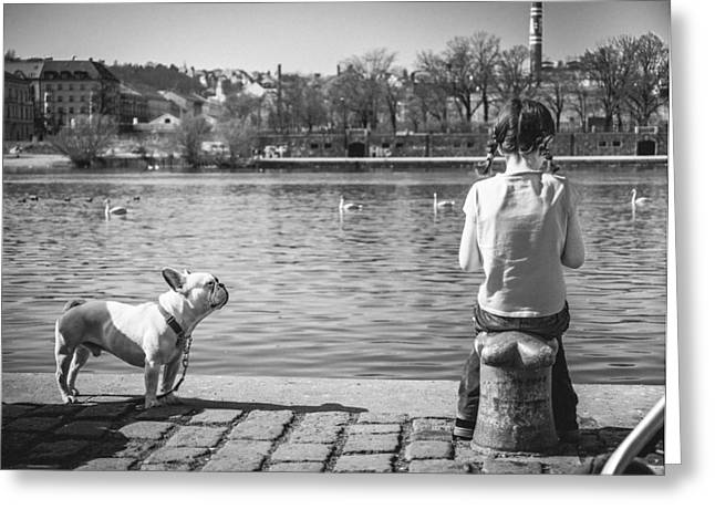 White Dog Greeting Cards - Untitled - Prague Greeting Card by Cory Dewald