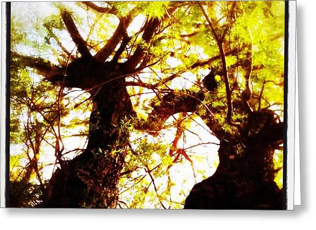Magical Pyrography Greeting Cards - Untitled-Twin Trees Greeting Card by Juliann Sweet
