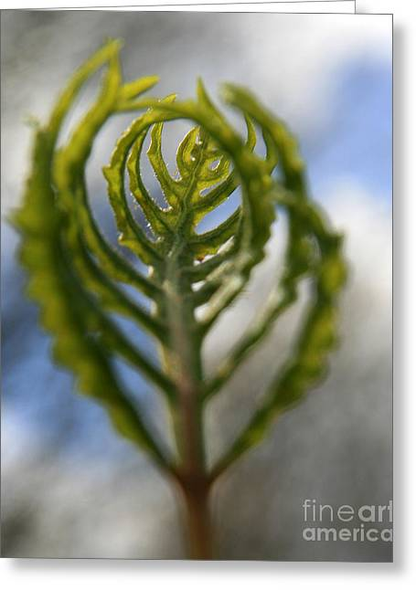 Neal Eslinger Photography Greeting Cards - Unwrapped Greeting Card by Neal  Eslinger