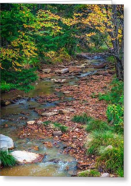 Autumn Prints Greeting Cards - Up a Creek in the Endless Mountains Greeting Card by Steve Harrington