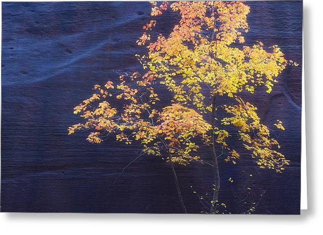 Oak Creek Greeting Cards - Up Against the Wall Greeting Card by Peter Coskun