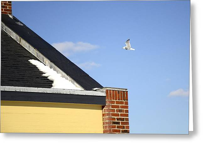 Flying Seagull Greeting Cards - Up and Over Greeting Card by Corinne Rhode