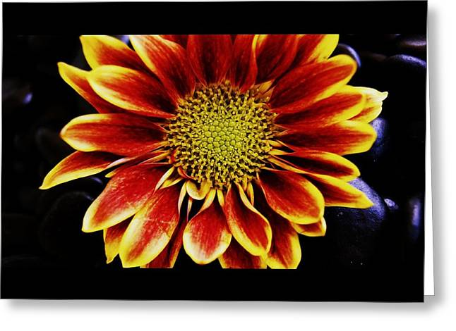 Diane Reed Greeting Cards - Up Close and Personal Greeting Card by Diane Reed