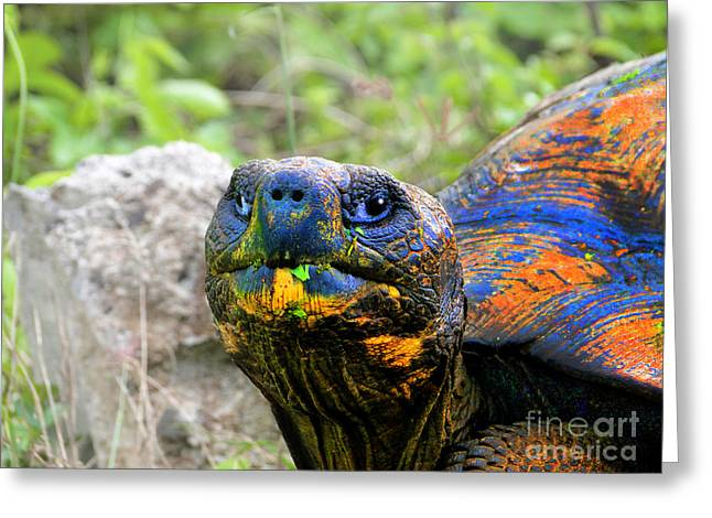 Tortuga Greeting Cards - Up Close And Personal With A Giant Tortoise In The Galapagos Greeting Card by Al Bourassa