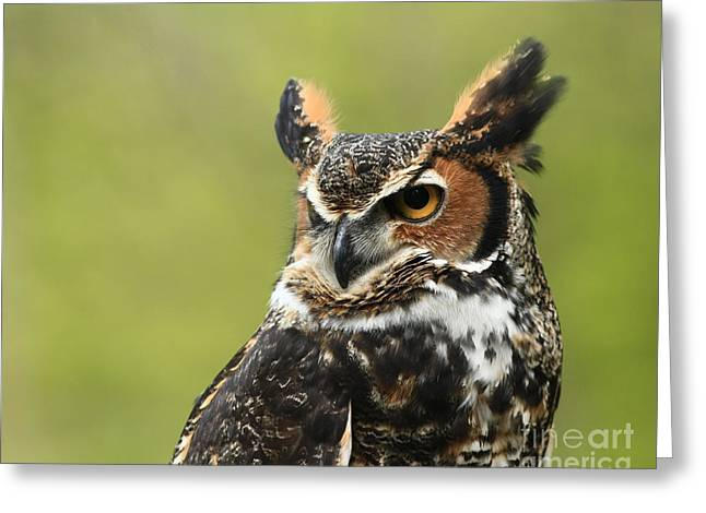 Up Close And Personal With The Great Horned Owl Greeting Card by Inspired Nature Photography Fine Art Photography
