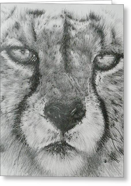 Wildcats Drawings Greeting Cards - Up Close Cheetah Greeting Card by Barbara Keith
