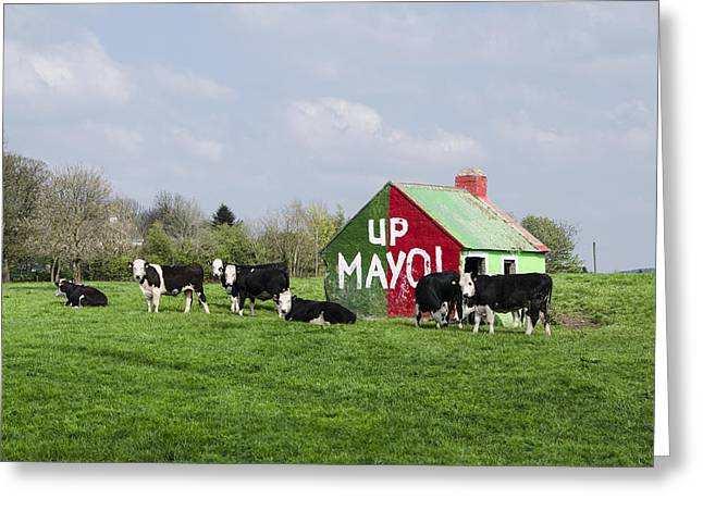 Mayo Greeting Cards - Up Mayo Greeting Card by Bill Cannon