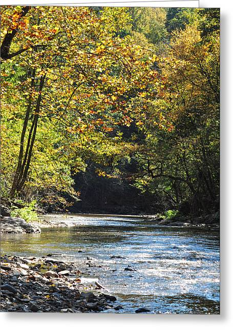 Wissahickon Creek Greeting Cards - Up on Wissahickon Creek Greeting Card by Bill Cannon
